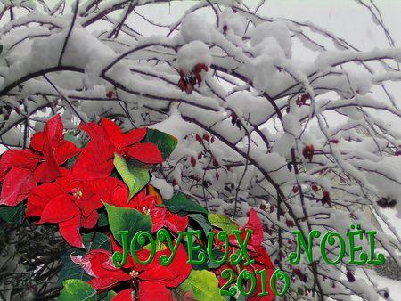 JOYEUX_NOEL_fleur_rouge_et_branches_enneigees