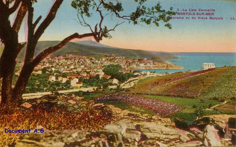 382 Panorama vu du Vieux Banyuls