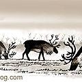 Rennes animal prehistorique