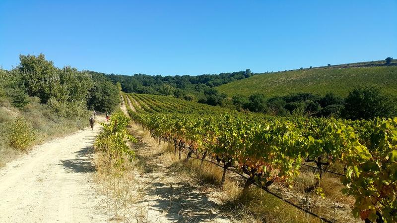 paysage chemin vignes
