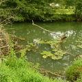 Rivière près de bourg-en-bresse