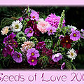Seeds of love 2019