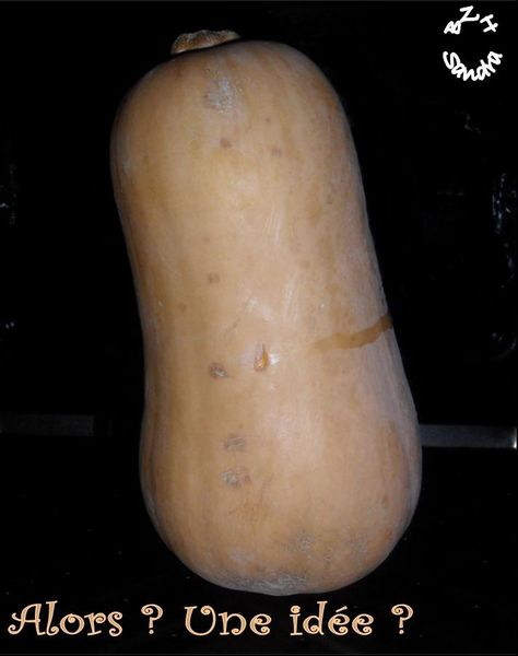 Courge butternut 2