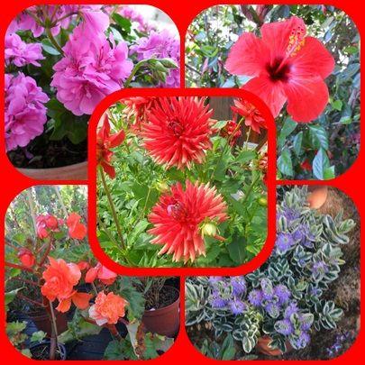 fleurs rouge!!!!!!