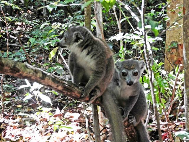 DIEGO-SUAREZ à MADAGASCAR (3/4) - Rencontre avec une amie blogueuse - 1 sujet et 1 recette