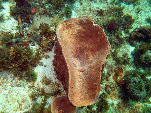 Madi-plongée (1)
