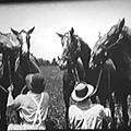 La fille de négofol (kentucky pride) de john ford - 1925