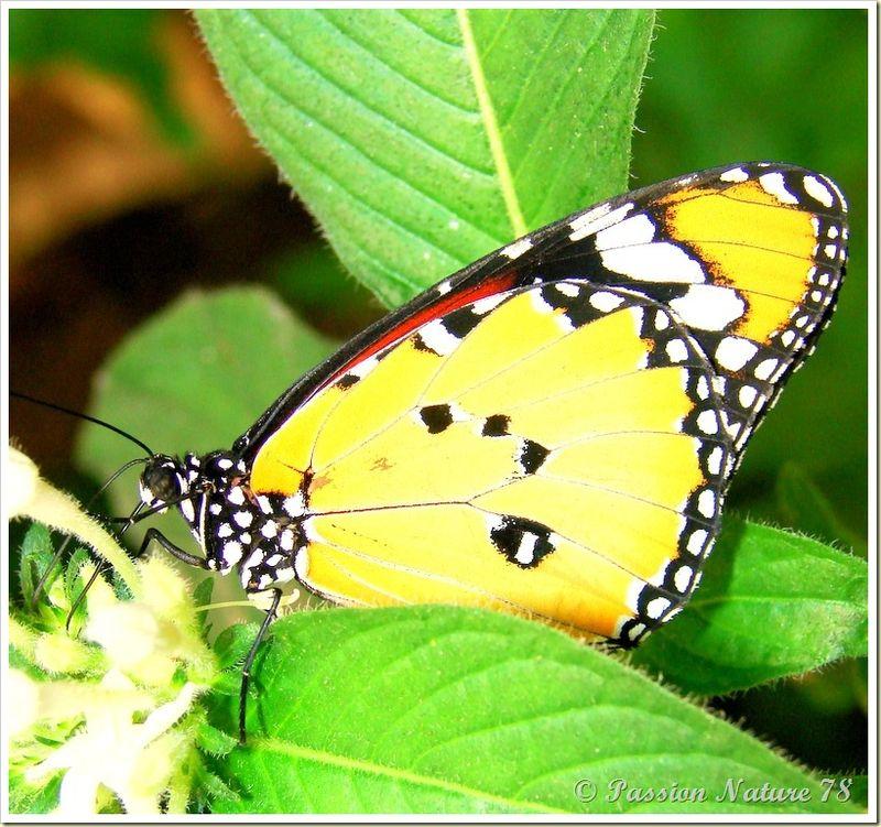 Les papillons (24)
