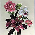 lys rouge, rose et orchidée097