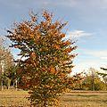 Arbre automne 1
