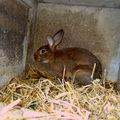 Les lapins de pâques !