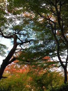 Japon_Kyoto_2009_2018