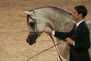Championnat du monde du cheval arabe le 11 12 10 (41)