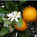 Gâteau d'anatolie à la fleur d'oranger