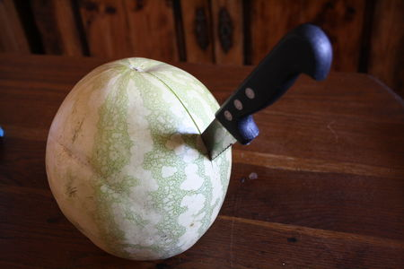 Melon_02