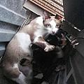 Paprika et ses petits