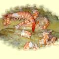 Poisson sauce crevette