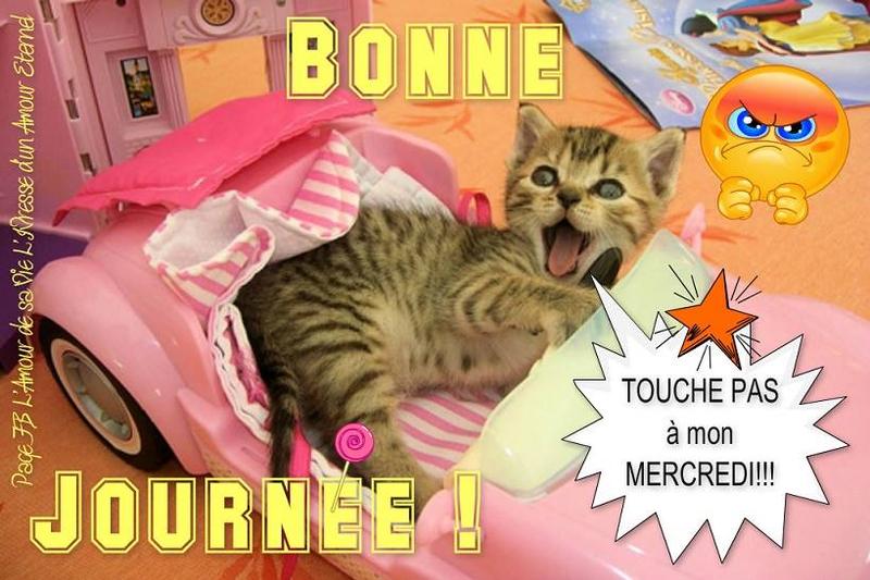 3 b me chat dit touche pasBPat19