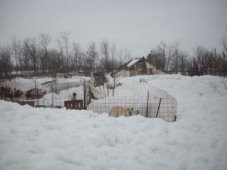 neige3