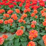 fleurs 26 mars 2013 (44)