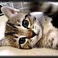 Prénoms de chat en
