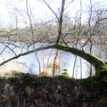 le chêne fait le pont