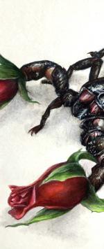 ExtraitScorpion1
