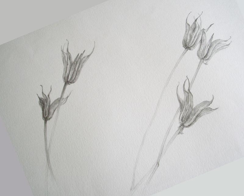 Fleurs Sechees Joung Hyun An