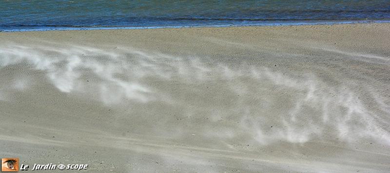 Baie de Somme : Le sable poussé par le vent