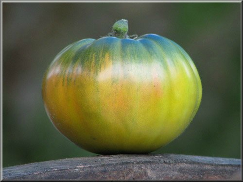 1 - tomate aunt ruby 's german green-https://www.passionpotager.canalblog.com