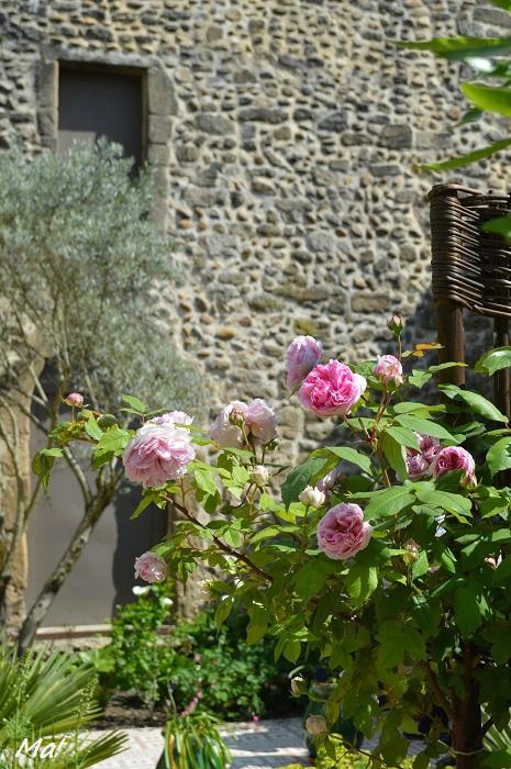150525_jardin_medieval7