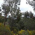 Marche nordique _ forêt de janas