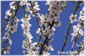 Cadenet_24_mars_129