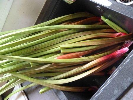 28-rhubarbe (1)