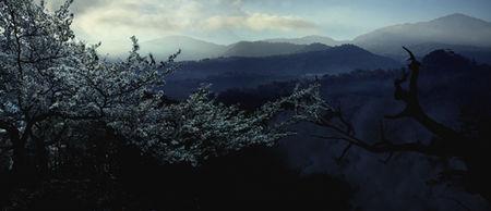 arbre_blanc_Etoile_davidaplatit