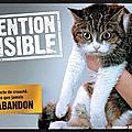30 millions d'amis - campagne 2018 - quand un chien (ou un chat) abandonne son maître... - video