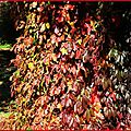 Feuillages automne 0910159