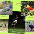 Visite ornithologique