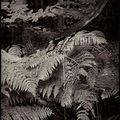 Fougères- forêt de boissy sous st yon