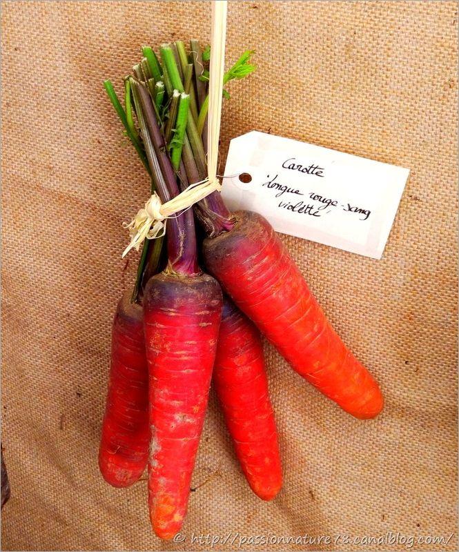 Les légumes d'autrefois (32)