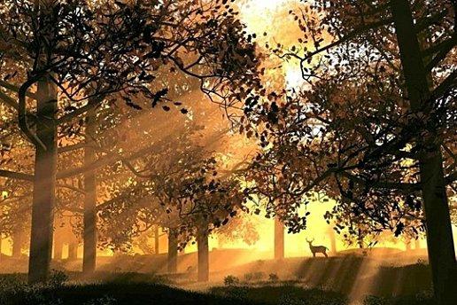 soleil_levant_arbres-1-