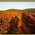 Vignes Pierrefeu (Var)