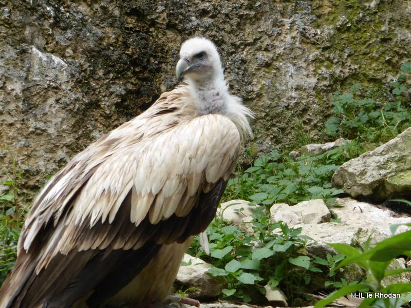 Parc aux oiseaux (22)