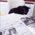 MI le chat qui pense