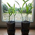 Potager en permaculture : les semis 7