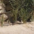 Egypt2007 554