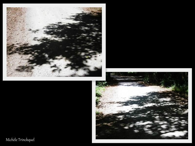 1-Ombres et Lac 200817