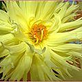 bouquetdalhia1