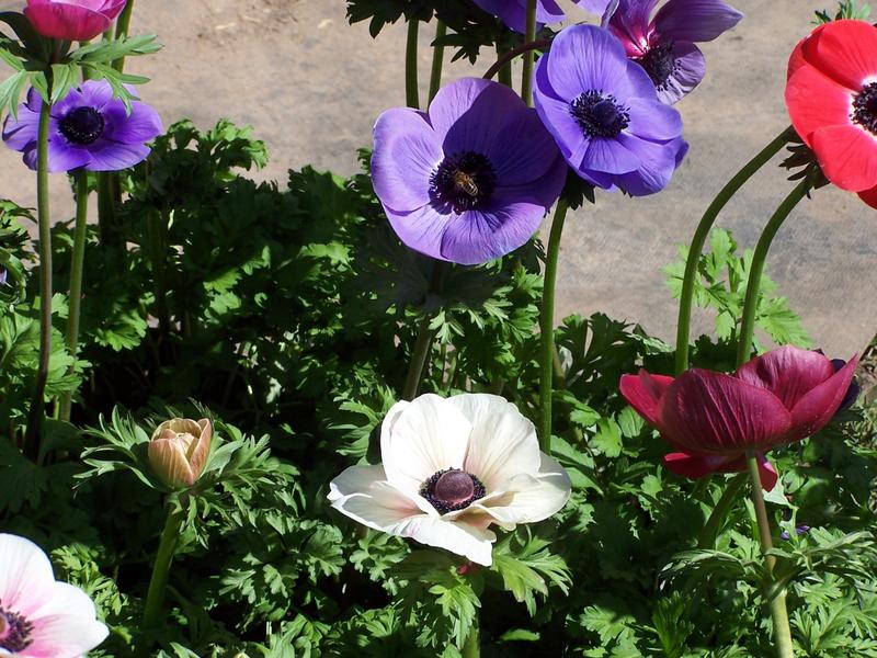 jardin beauregard 024