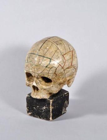 Crâne en plâtre patiné et peint destiné aux étudiants en néphrologie. XIXème siècle. photo Eve